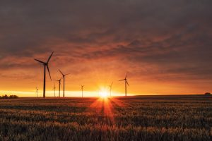 Carbon neutral companies - who actively helps the environment? | Concise Software