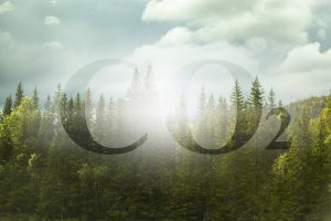 Reducing co2 emissions with use of a carbon footprint calculator; an image with co2 text against woodland